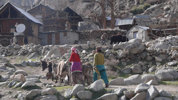 Farmer and donkeys walking,Chitkul,India Footage