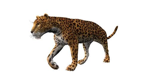 leopard walking,loop, animation, Alpha channel Animation