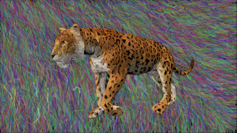 leopard drawing animation sketch Animation
