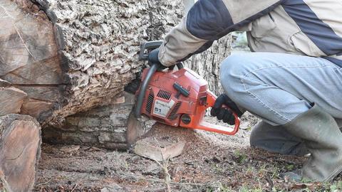 Man With Chainsaw Cutting Walnut Log