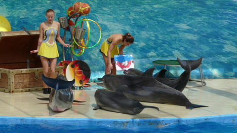 Dolphins draw on show in Anapsky Dolphinarium Footage