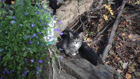 One striped little kitten Footage