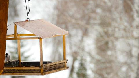Bird feeder in the park Footage