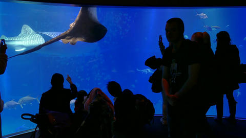 Osaka Aquarium In Japan Asia With People Visitors Sharks Fish