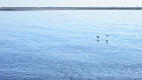 Ducks fly sky-high over river Footage