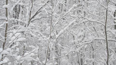 Snow Falls on Trees Footage