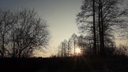 Sunset behind trees Footage