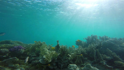 animal, biodiversity, blue, blue background, colorful, coral reef, crowd, dive,  Footage