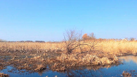 The Reeds And A Lone Tree Footage