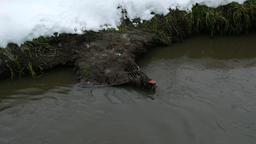 Supermarket trolley sink in muddy water, lie under thick filth layer Footage