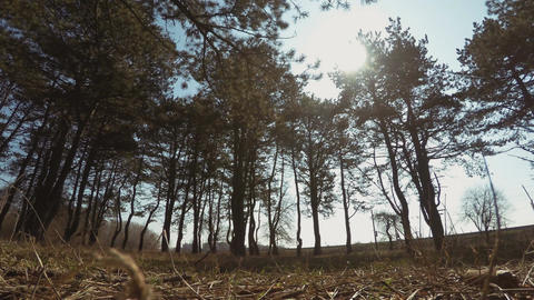 View From The Forest Footage