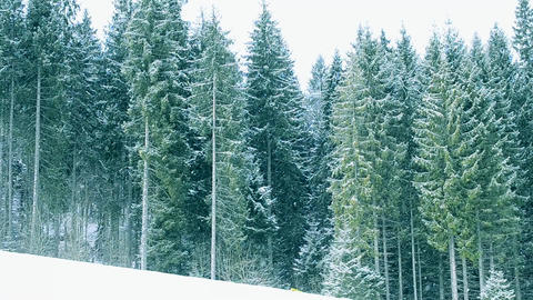 Snow on fir trees in mountains Footage