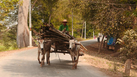 Man on the loaded vehicle with ox in rural Myanmar Footage