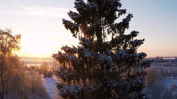 Beautiful snow landscape. Winter trees. Sunset. Aerial footage. Flying around Footage