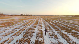 Yellow field covered with snow. Winter sunset. Aerial footage. Low altitude Image