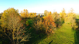 Yellow autumn trees. Fliying above the trees and fields. Aerial footage Footage