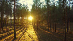 Aerial footage of autumn forest. Sunset. Aerial footage Footage