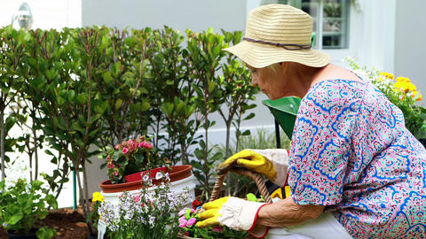 Senior woman gardening in the garden Live Action