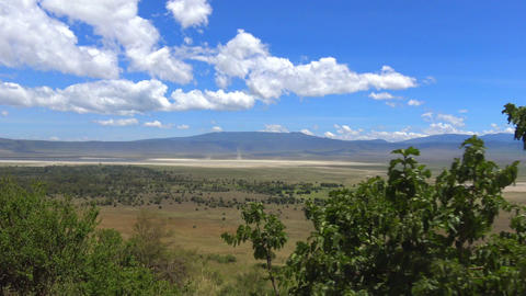 In the crater Ngorongoro. Safari - journey through the African Savannah. Tanzani Footage