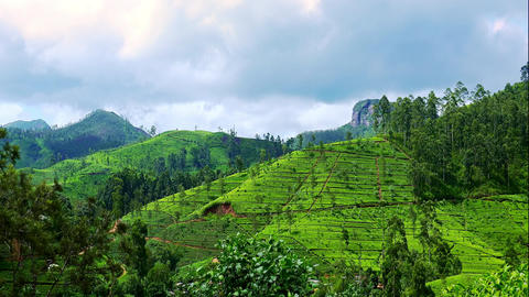 Morning at highland tea plantation at Sri Lanka. Spectacular landscape Footage