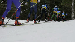 group skiers athletes in pine forest Footage