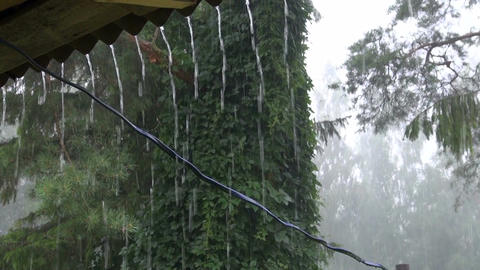 Rainfall in summer Live Action
