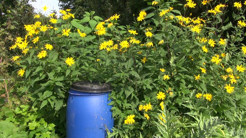 Plastic organic fertilizer canister in garden Live Action