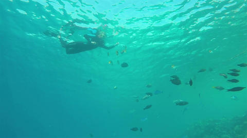 Snorkeling with Fishes, Dramatic view from below Footage
