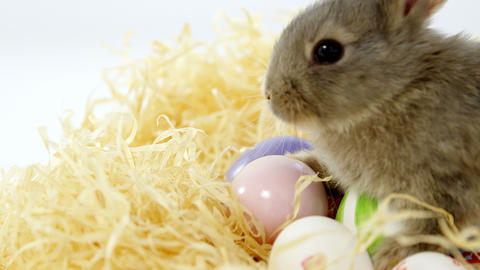 Easter eggs with Easter bunny in nest Live Action