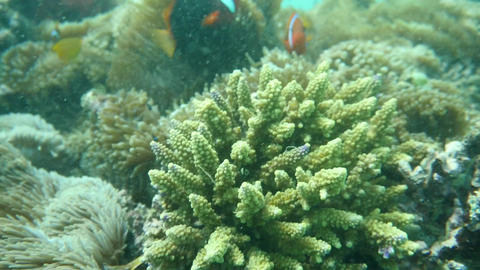 fishes at Sanur, Bali Footage