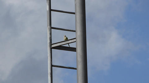 Bird Rests On Pole Footage