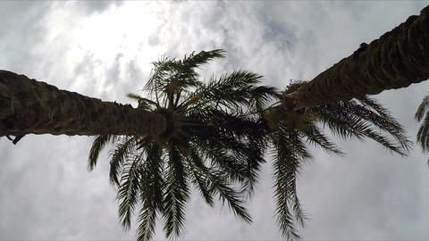 Palm Trees, View From Below Footage