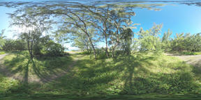 360 VR Green landscape with woods and path leading to the ocean, Mauritius ビデオ