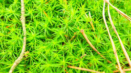Fresh green wet moss on ground with leaves fallen. Dry... Videos de Stock
