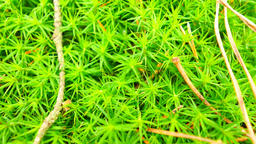 Fresh green wet moss on ground with leaves fallen. Dry pine needles, twigs and d 영상물