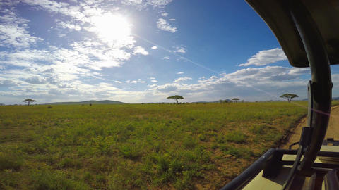 African elephants. Safari - journey through the African Savannah. Tanzania Footage