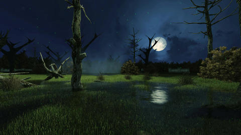 Night swamp with mystic lights cinemagraph Animation