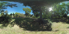 360 VR Green woods on river bank in Mauritius Archivo