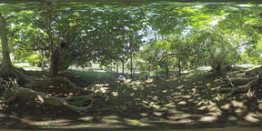 360 VR Green park in Mauritius on sunny day ビデオ