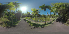 360 VR Mauritius green park with pond in bright sunlight Filmmaterial