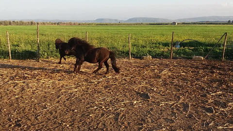 pony in the farm Footage