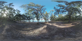 360 VR Scene of Mauritius nature and trees on the ocean coast Archivo