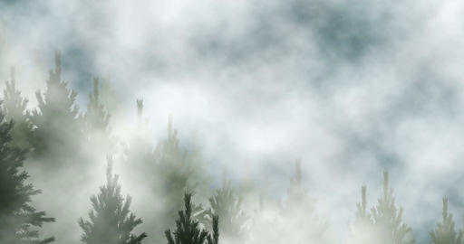 Conifer forest fog Animation