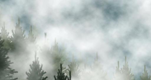 Conifer forest fog CG動画素材