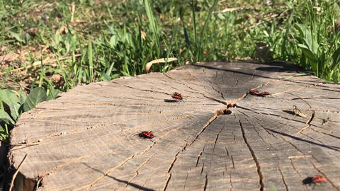 Bugs on a tree stump, timelapse Live Action