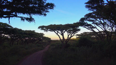 Dawn in the Ngorongoro crater Footage
