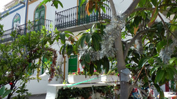 Spain Gran Canary Mogán 038 christmas decoration in exotic plants Footage