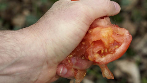 Anonymous Person Crushing Tomato In Hand Closeup ビデオ