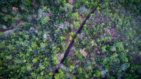 Person walking in the forest, seen from above the sky Footage
