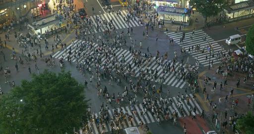 Shibuya Crossing at Night Live Action
